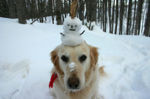 dog_w_snowman